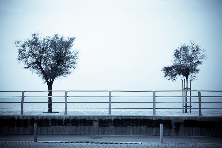 Tree Photograph - Separate Worlds by Victoria Savostianova