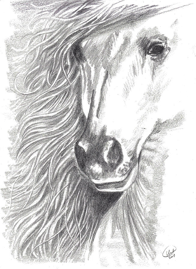Equine Drawing - Serenity by Kate Black