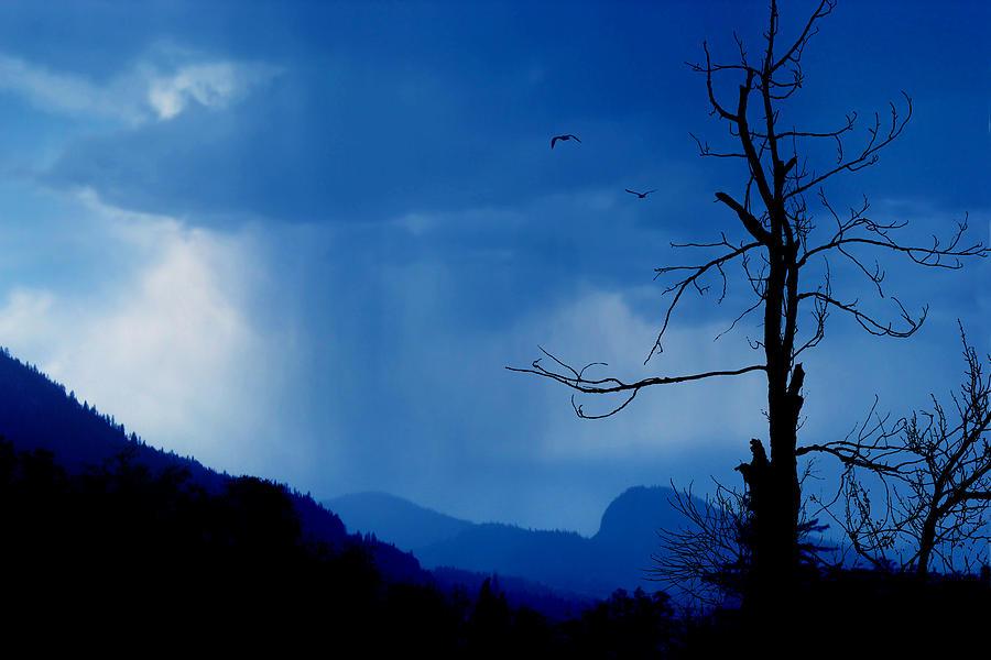 Rain Photograph - Shadows In The Rain  by John  Poon