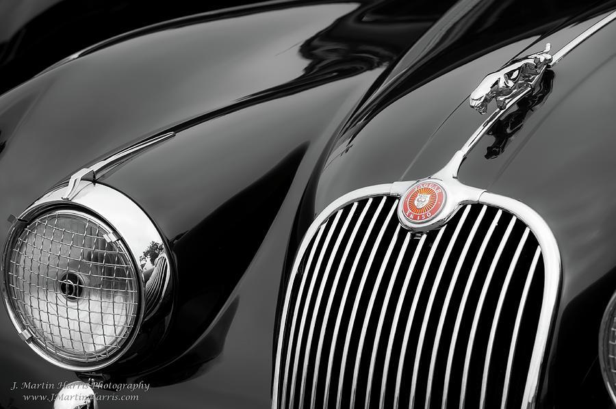 Jaguar Photograph - Shagadelic by Jim Harris