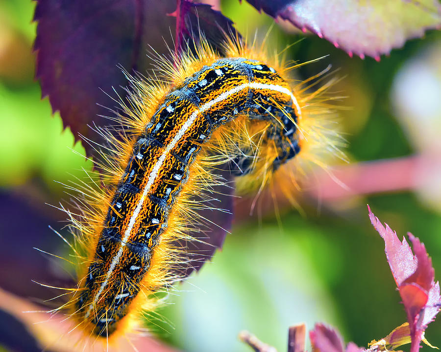Caterpillar Photograph - Shagerpillar by Bill Tiepelman