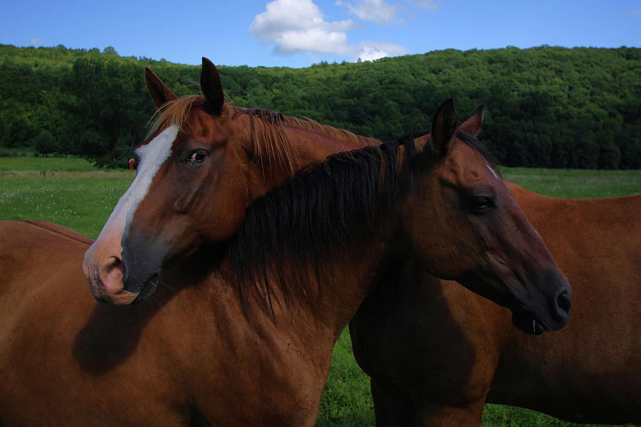 Horses Photograph - She Is Mine by Karol Livote