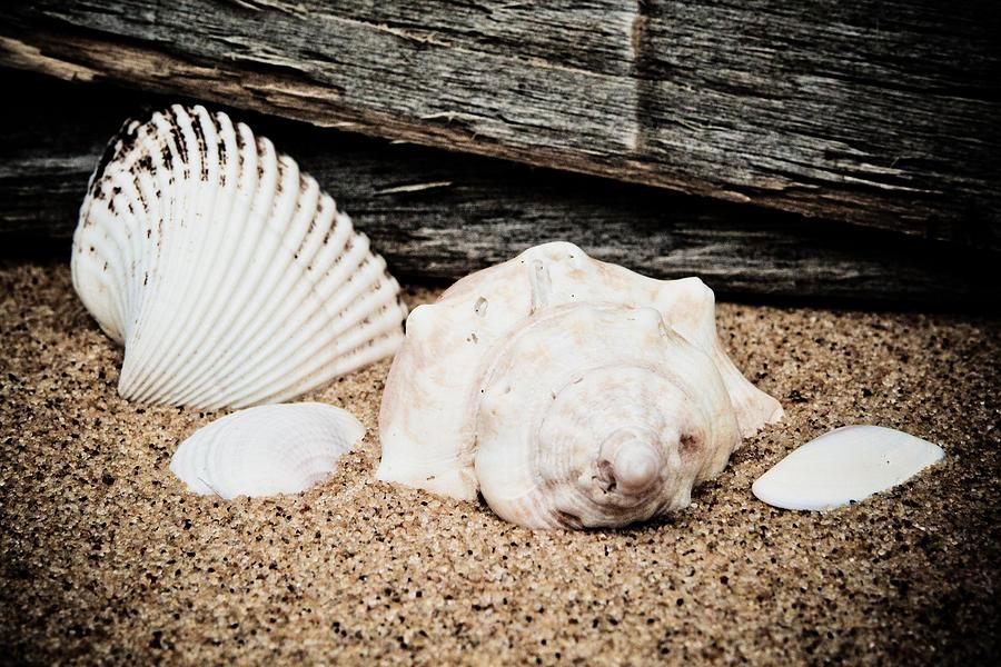 America Photograph - Shells On The Beach by David Hahn