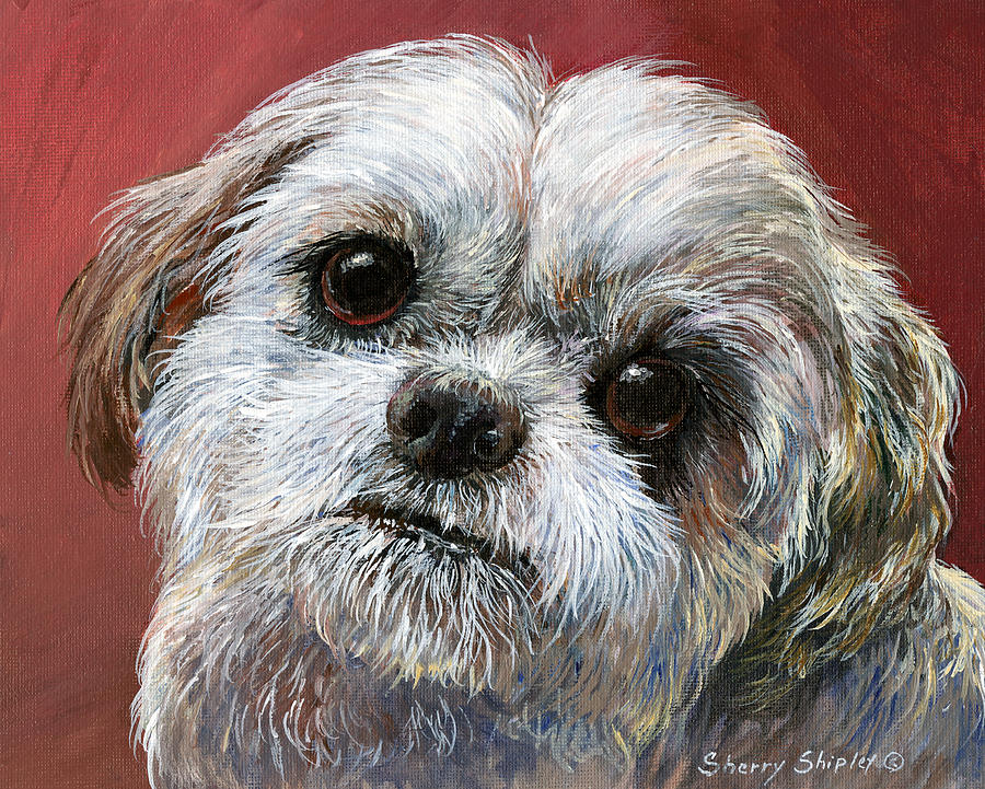 Dog Painting - Shih Tzu by Sherry Shipley