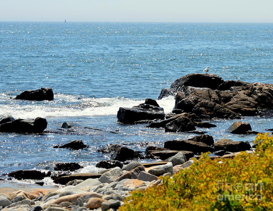 Shoreline Of Maine Photograph