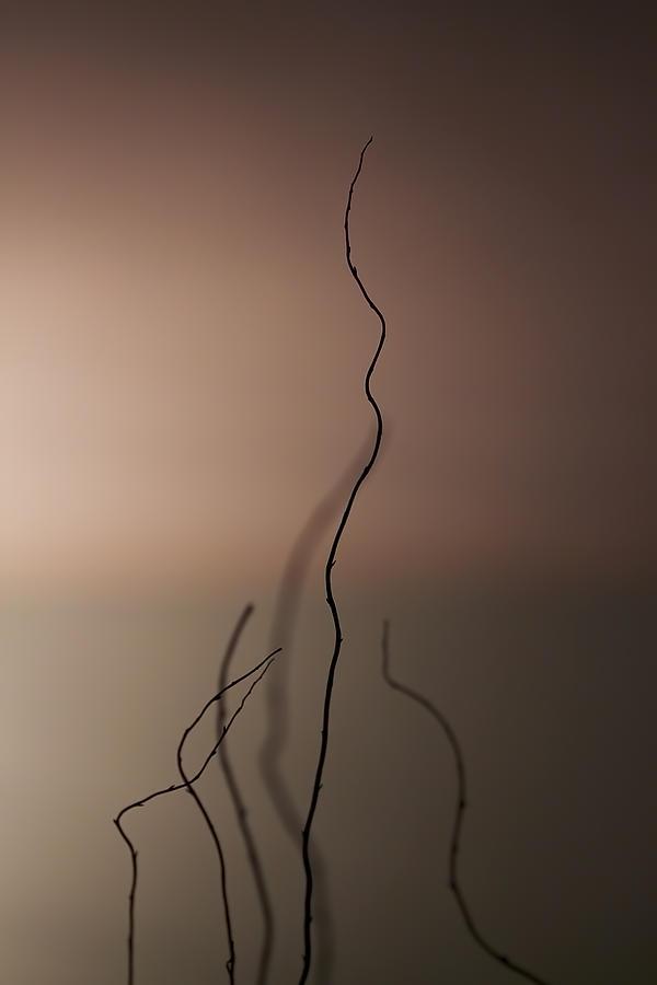 Stick Photograph - Silence by Evelina Kremsdorf