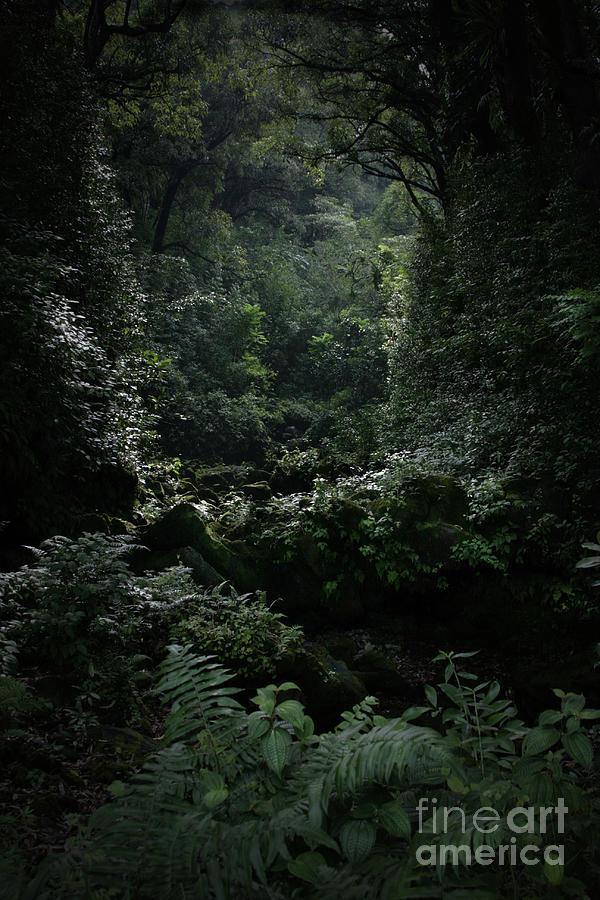 Hana Photograph - Silence Is Round Me   - Mokulehua by Sharon Mau