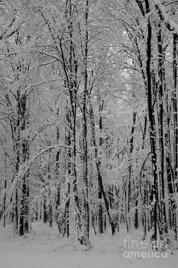 Silence Of Winter Photograph