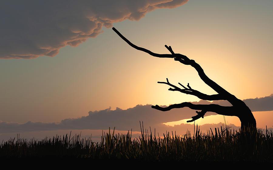 Trees Photograph - Silhouette by Bob Orsillo