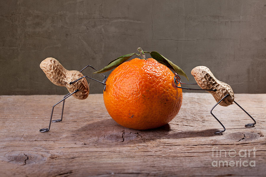 Peanut Photograph - Simple Things - Antagonism by Nailia Schwarz
