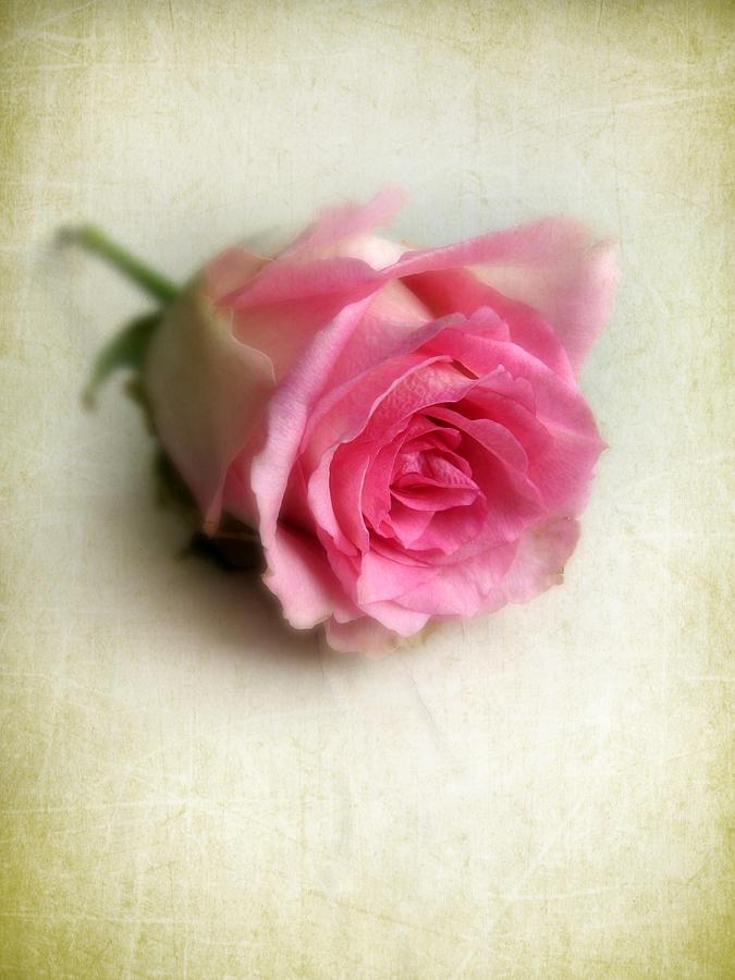 Flower Photograph - Singular by Jessica Jenney