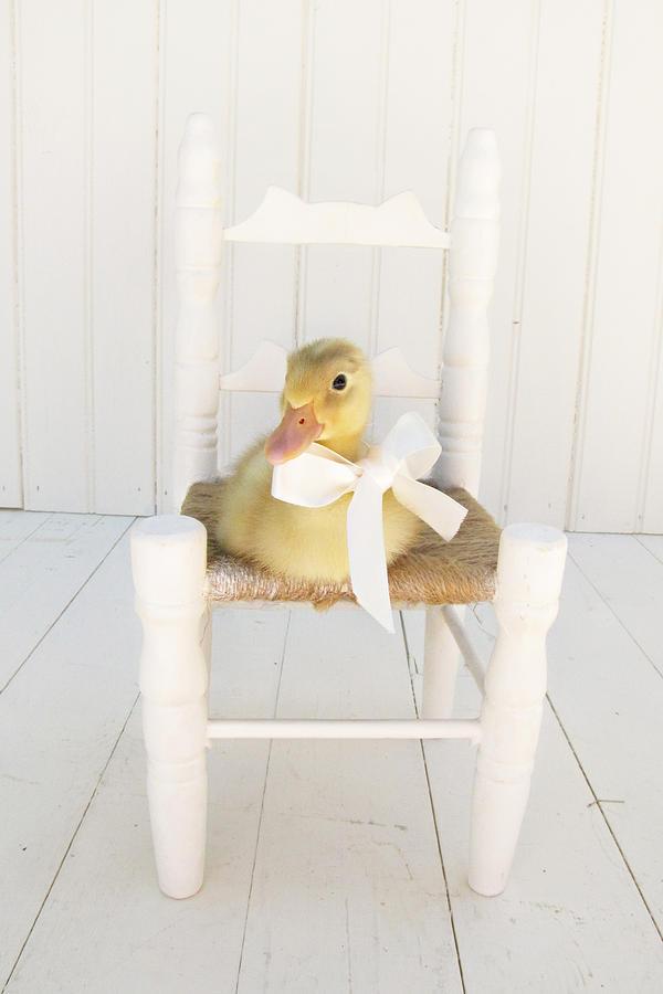 Sitting Pretty Photograph