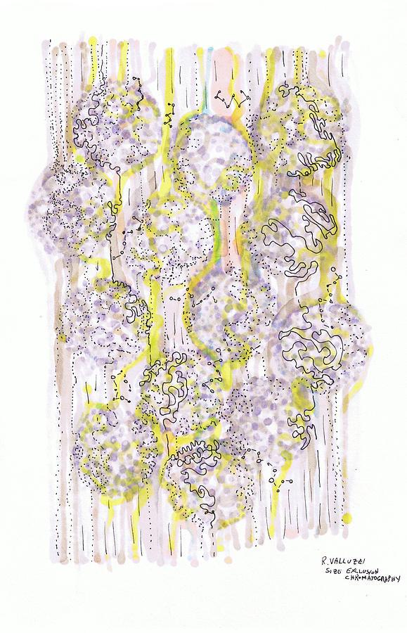Chromatography Drawing - Size Exclusion Chromatography by Regina Valluzzi