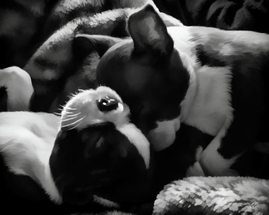 Sleeping Beauties Painting - Sleeping Beauties - Boston Terriers by Jordan Blackstone