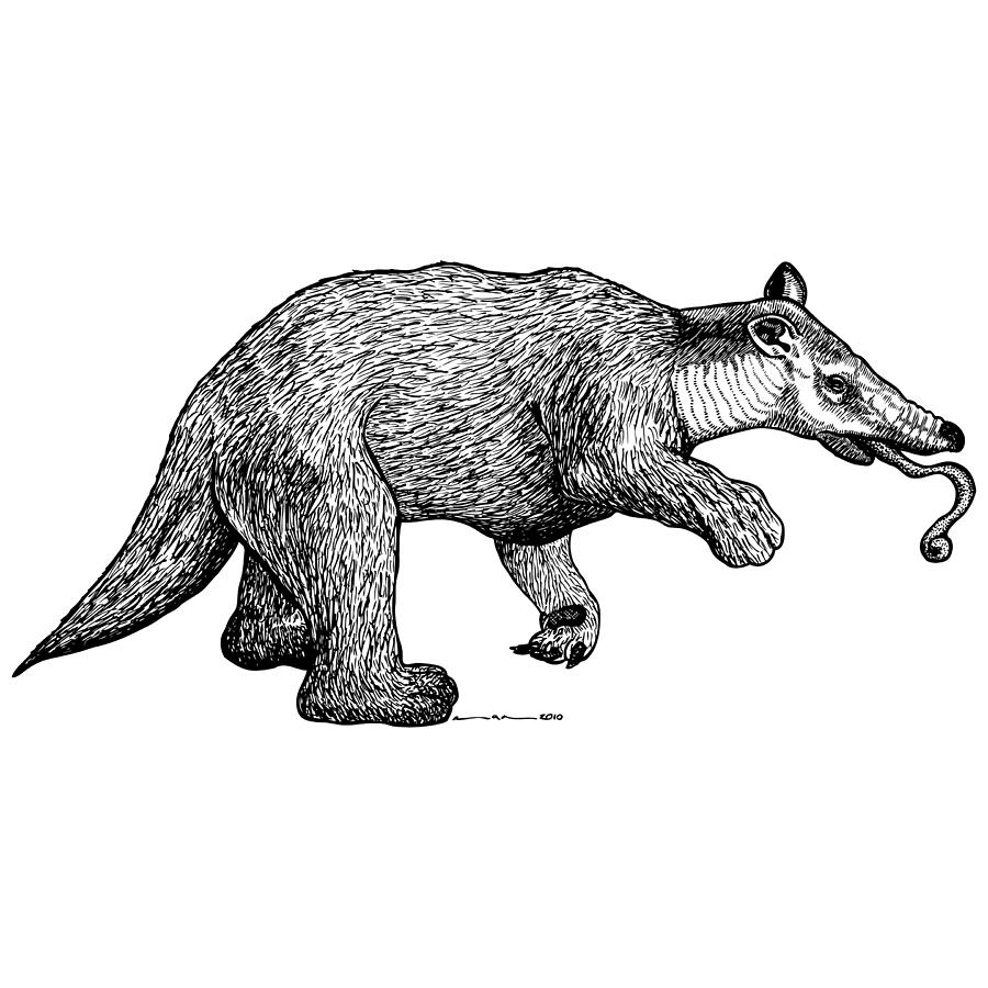 Drawing Drawing - Slothbear by Karl Addison