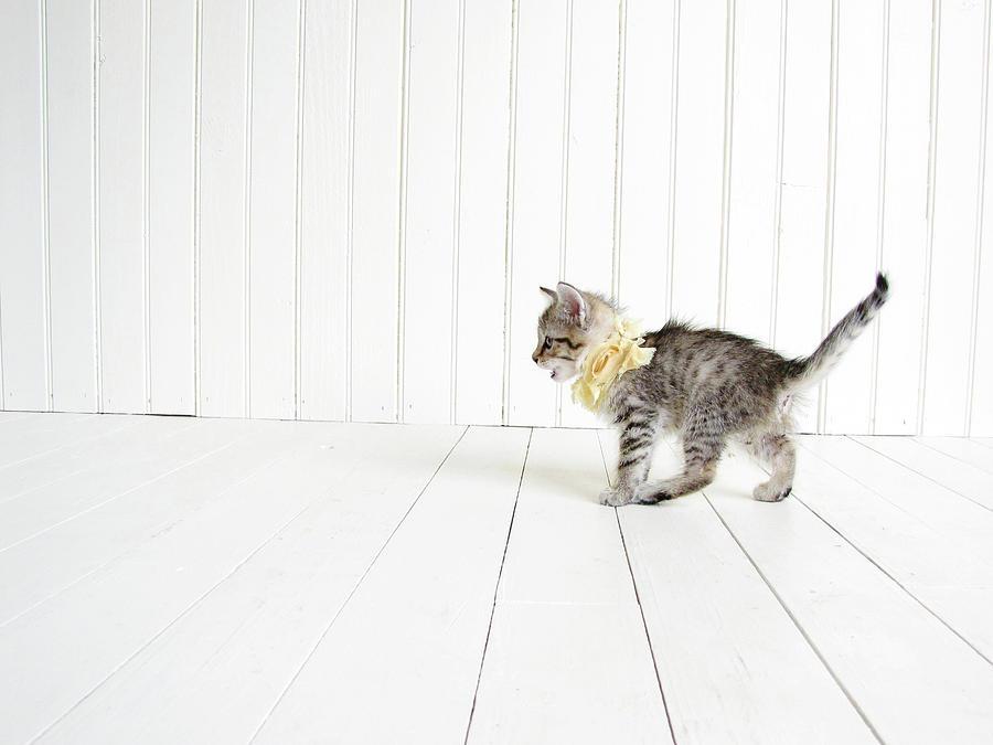 Kitten Photograph - Small by Amy Tyler