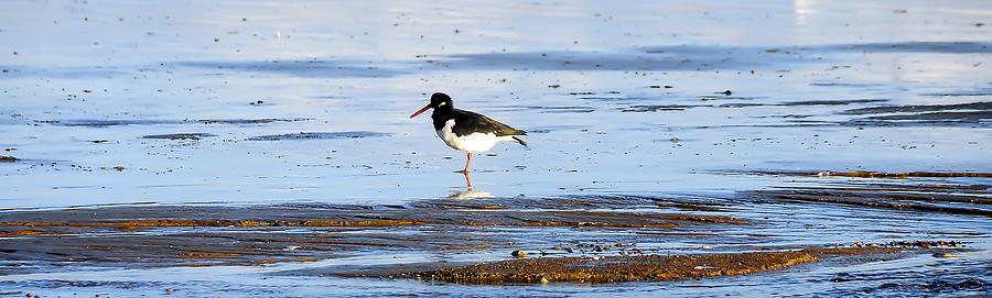 Seagull Photograph - Small Bird by Svetlana Sewell