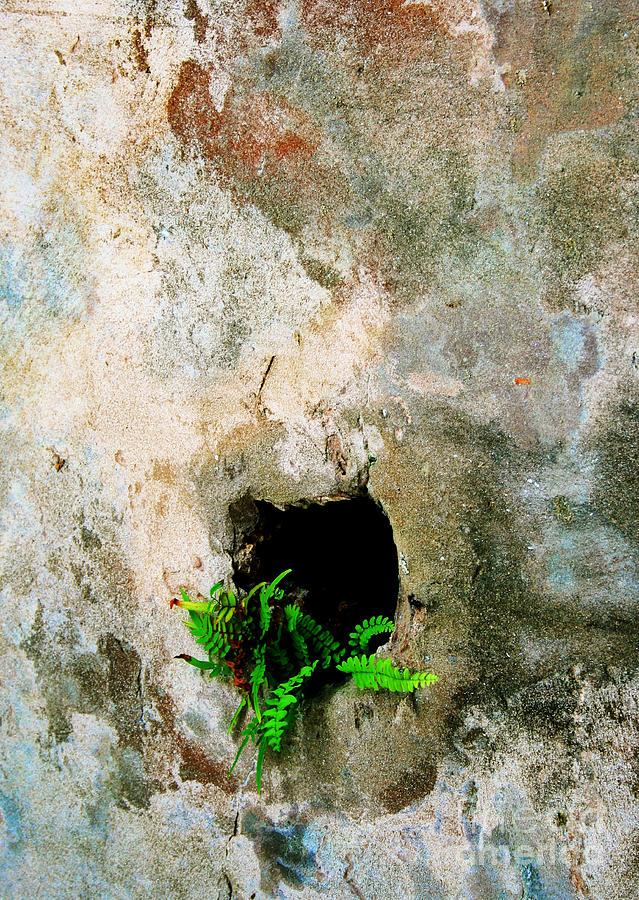 Small Ferns Photograph