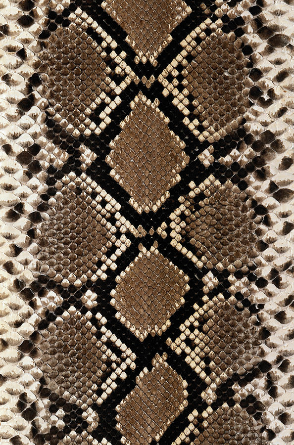 Vertical Photograph - Snake Skin by Siede Preis