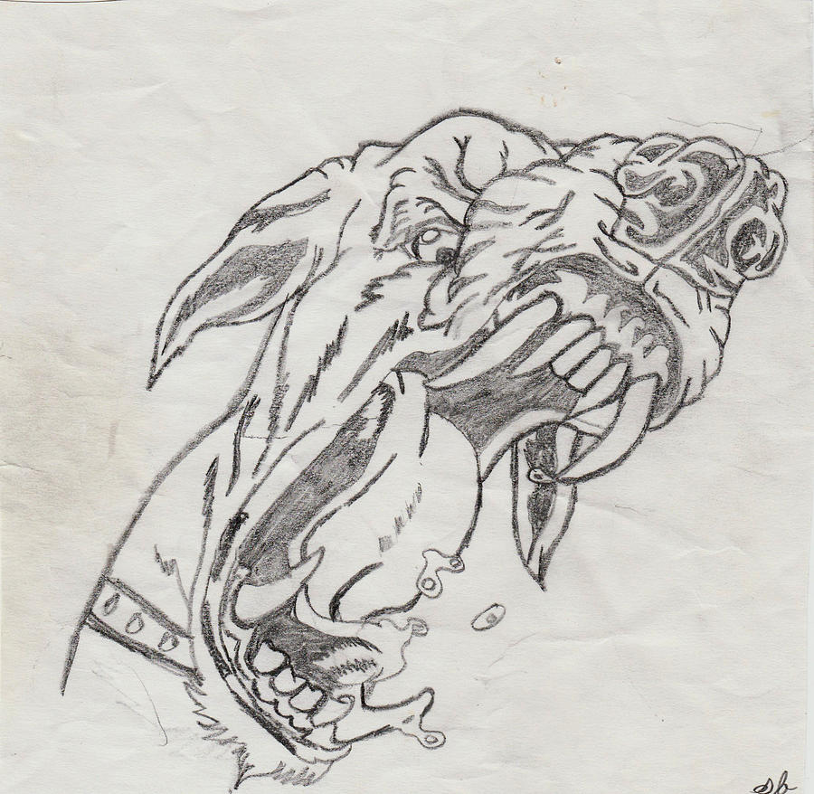 Snarling Dog Drawing By Shania Brown