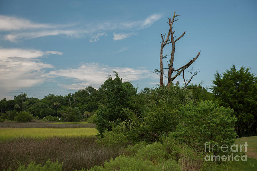 Snee Farm Marsh View Photograph