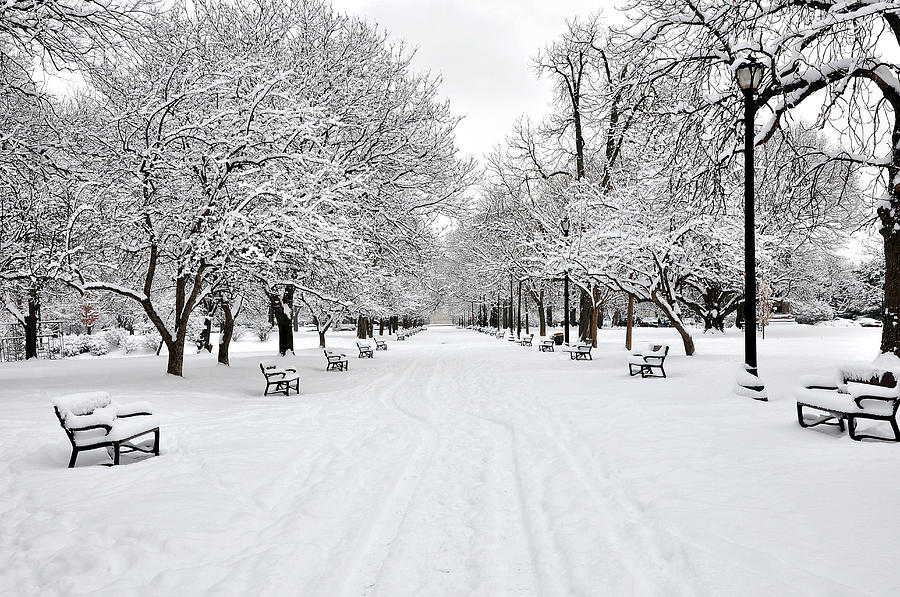 Horizontal Photograph - Snow Covered Benches And Trees In Washington ...