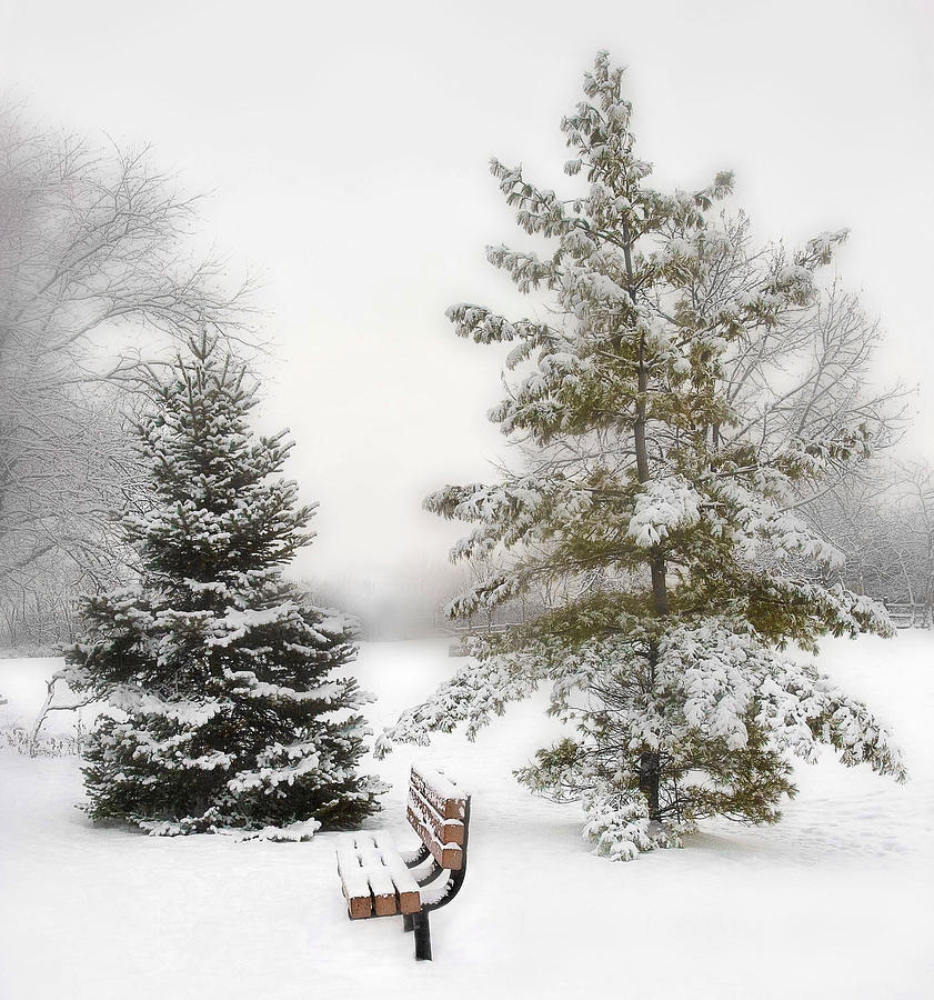 Winter Photograph - Snow In The Park by Liviu Leahu