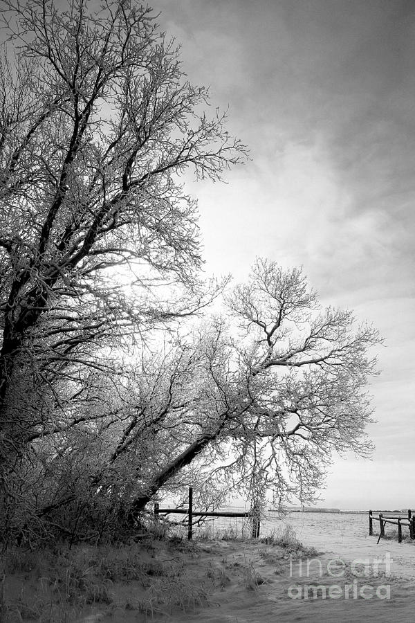 Snow Photograph - Snow Lace by Julie Lueders