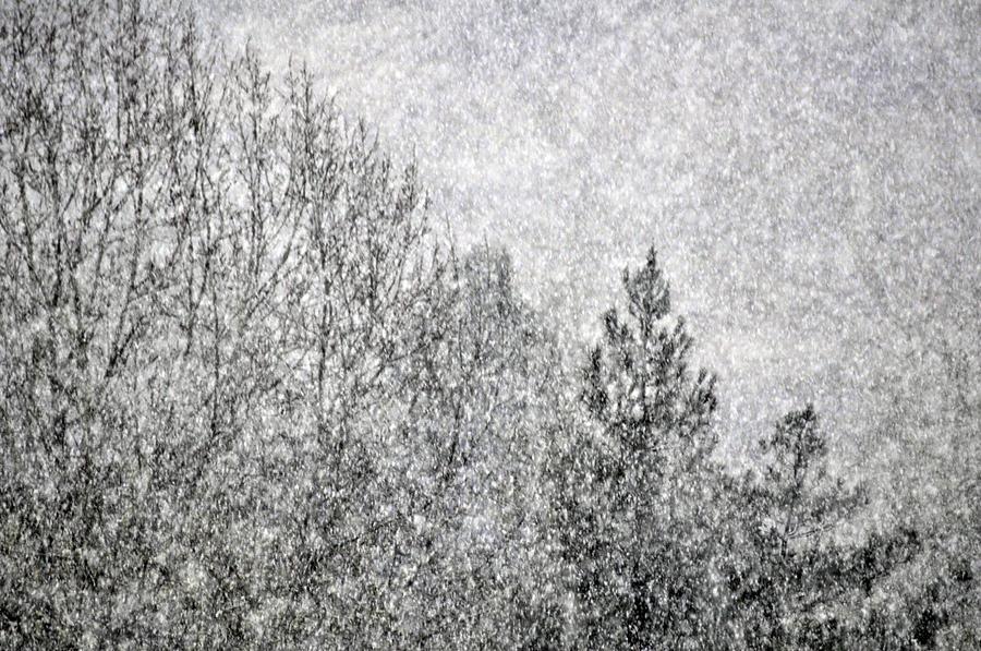 Snow Squawl Photograph