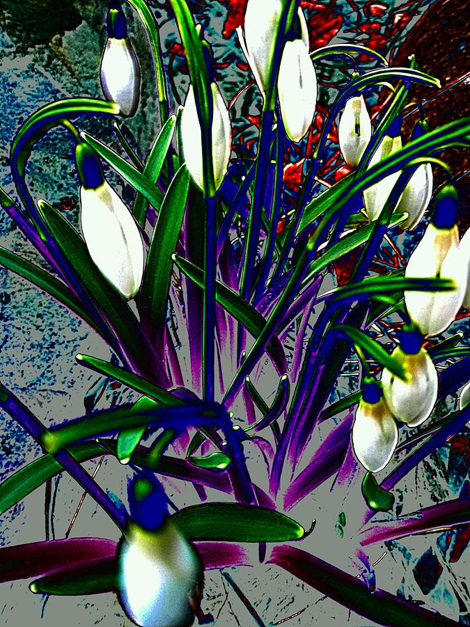 Snowdrops In Abstract Photograph - Snowdrops In Abstract  by Beth Akerman