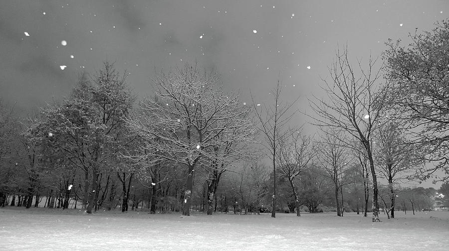 Horizontal Photograph - Snowfall At Night by Mark Watson (kalimistuk)