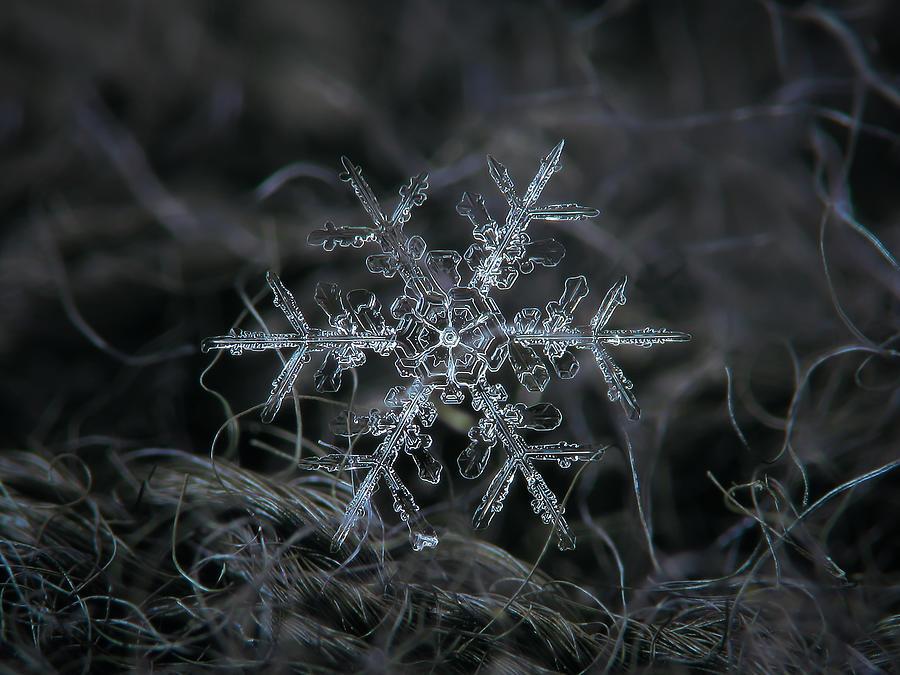 Snowflake Photograph - Snowflake 2 Of 19 March 2013 by Alexey Kljatov