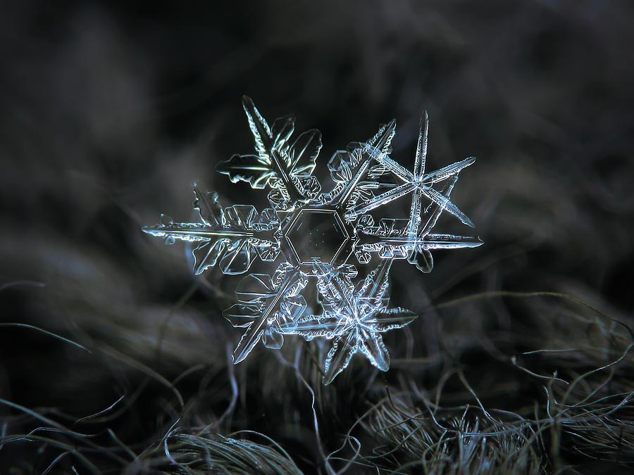 Snowflake Photograph - Snowflake Of 19 March 2013 by Alexey Kljatov