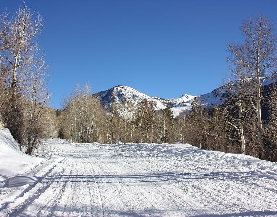 Snowy Aspen Photograph
