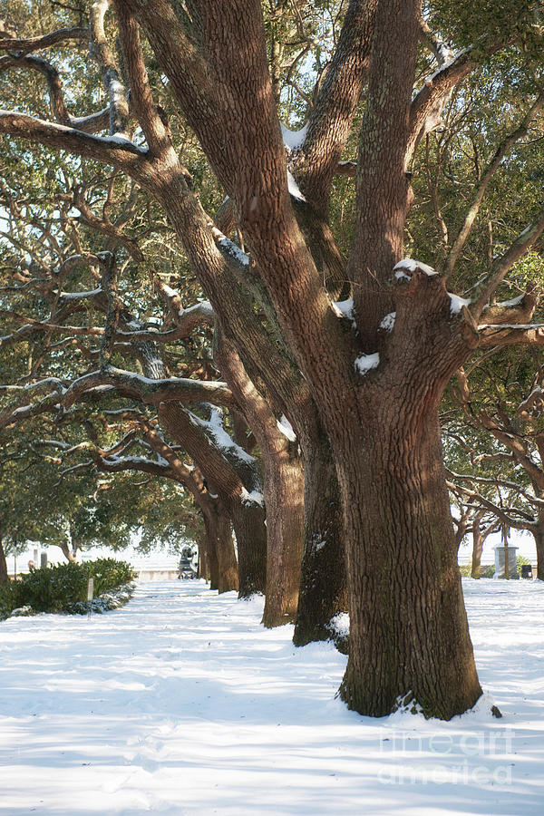 Snowy Battery And Whitepoint Garden Photograph