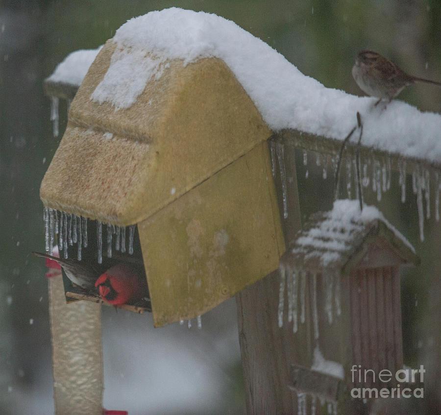Snowy Bird Feeder Photograph