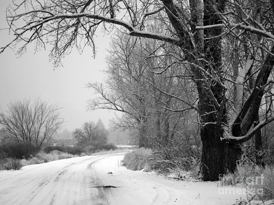 Snowy Branch Over Country Road - Black And White Photograph