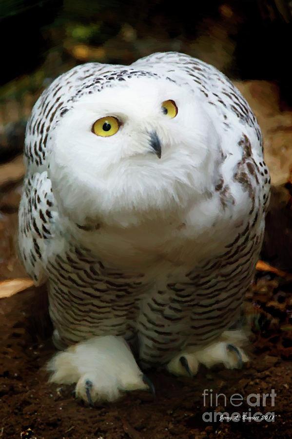 Snowy Mixed Media - Snowy Owl by Jerry L Barrett
