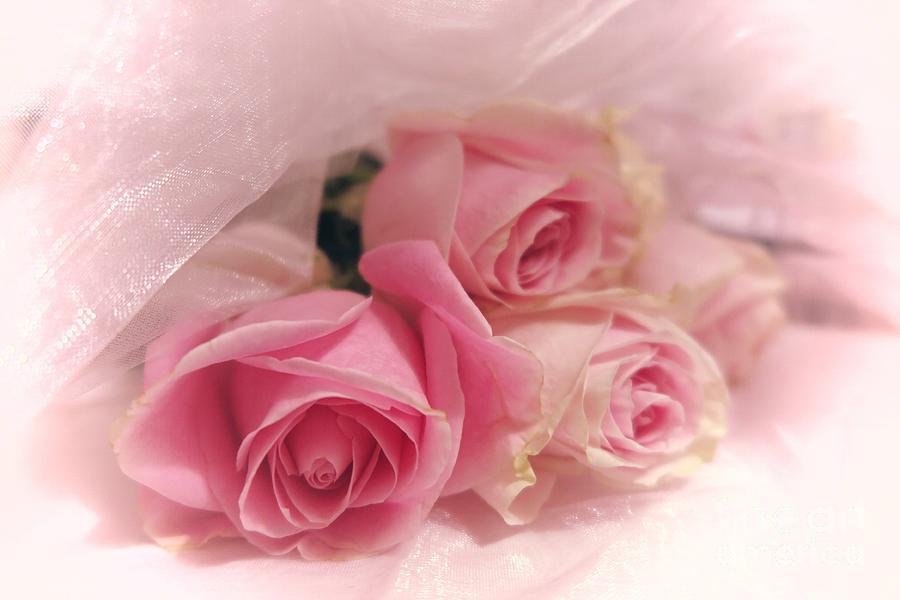 Soft Pink Roses 3 Photograph By Tara Shalton