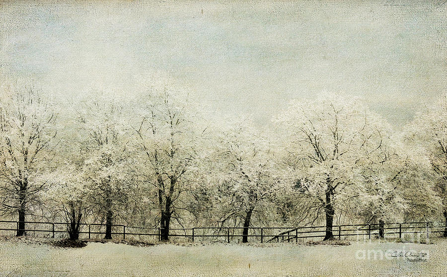 Softly Falling Snow Photograph