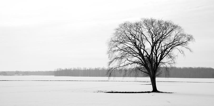 Winter Photograph - Solitude by Levin Rodriguez