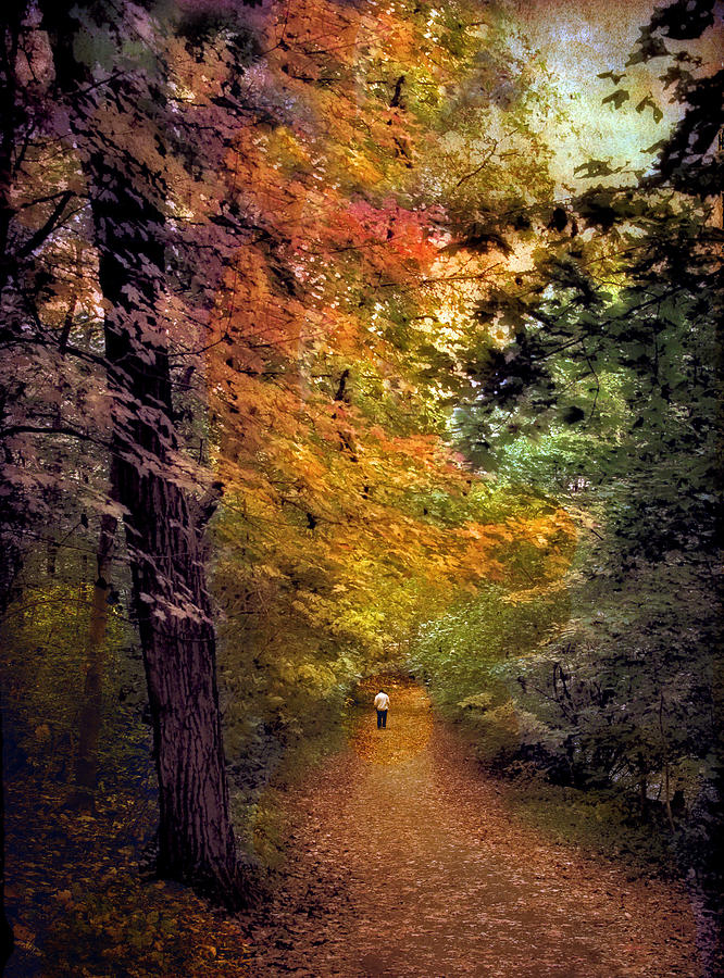 Nature Photograph - Solo Promenade by Jessica Jenney
