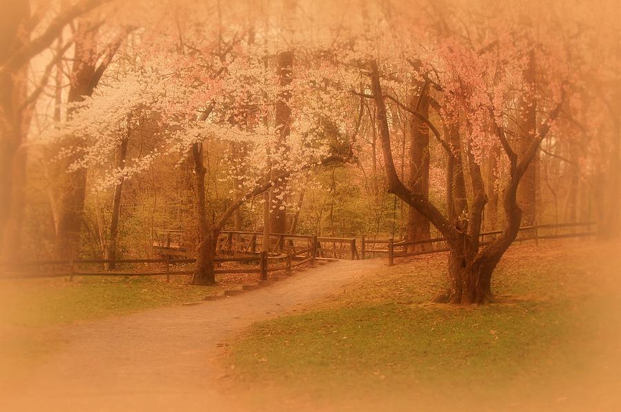 Sometimes - Holmdel Park Photograph