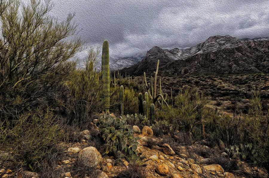 Sonoran Winter No.3 Photograph
