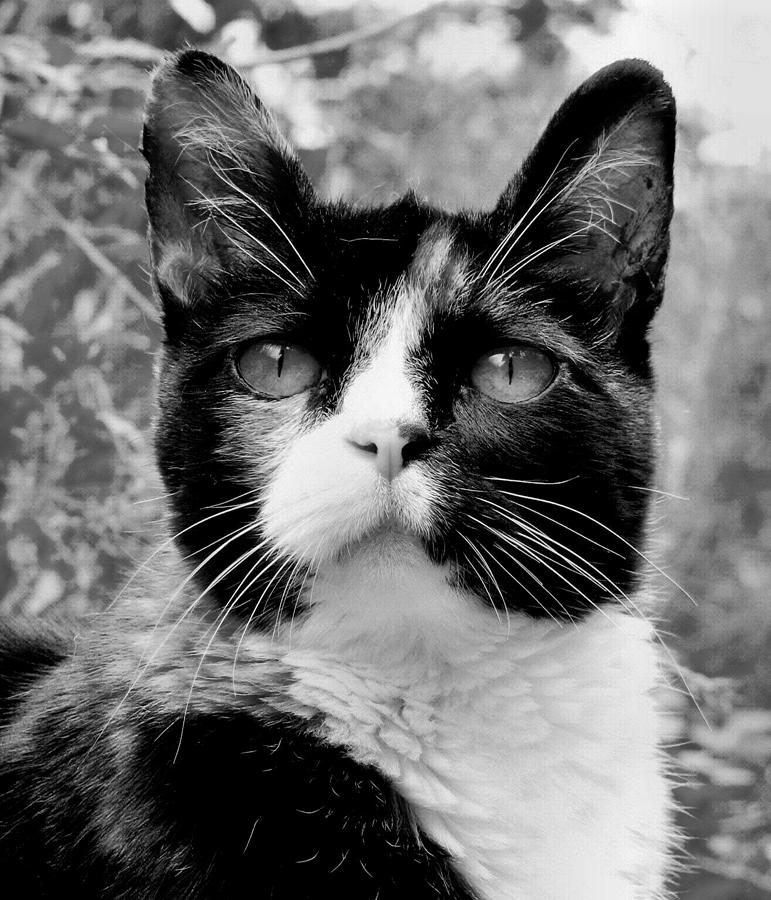 Cat Photograph - Souls Great And Small by Rory Sagner