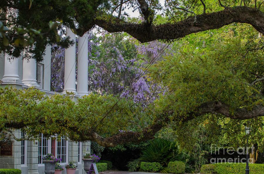 Southern Columns Photograph