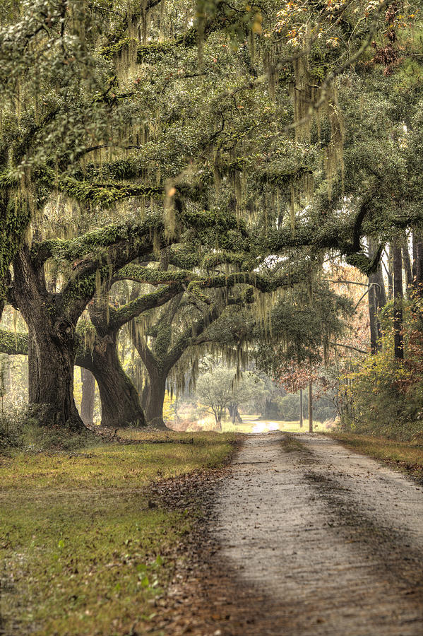 Plantation Photograph - Southern Drive Live Oaks And Spanish Moss by Dustin K Ryan