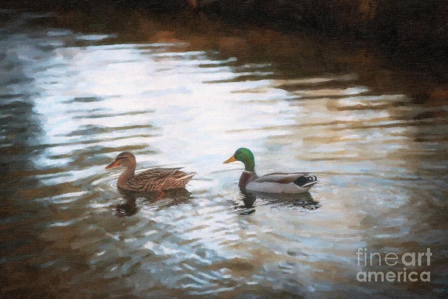 Southern Mallard Ducks Digital Art