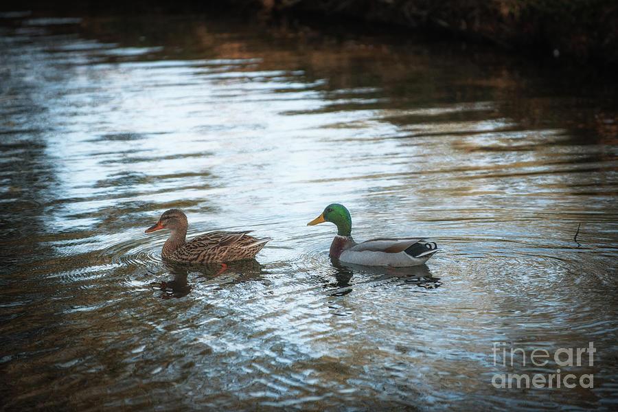 Southern Plantation Ducks Photograph