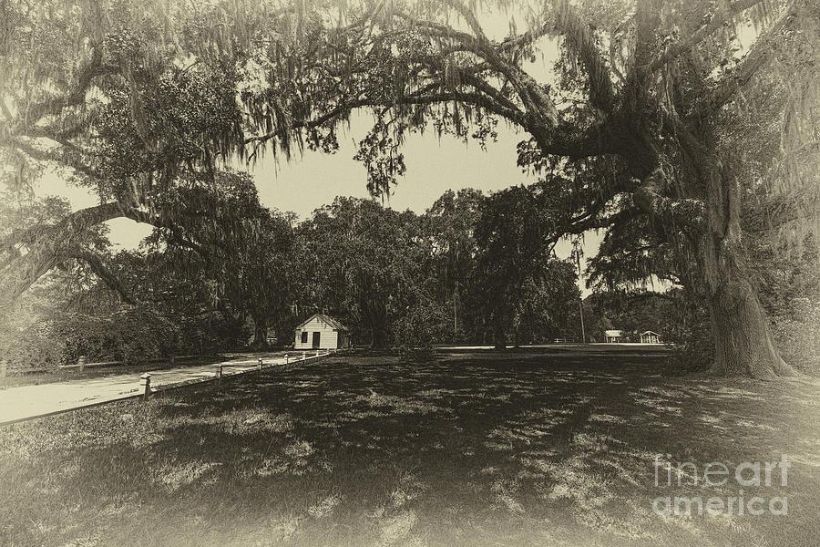 Southern Plantation Path Photograph